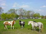 Pferde an der Dresdner Straße, Pretzschendorf