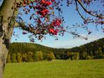 Vogelbeerbaum bei Röthenbach